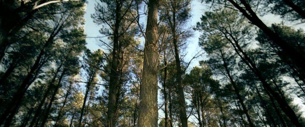 Pirihima Forest
