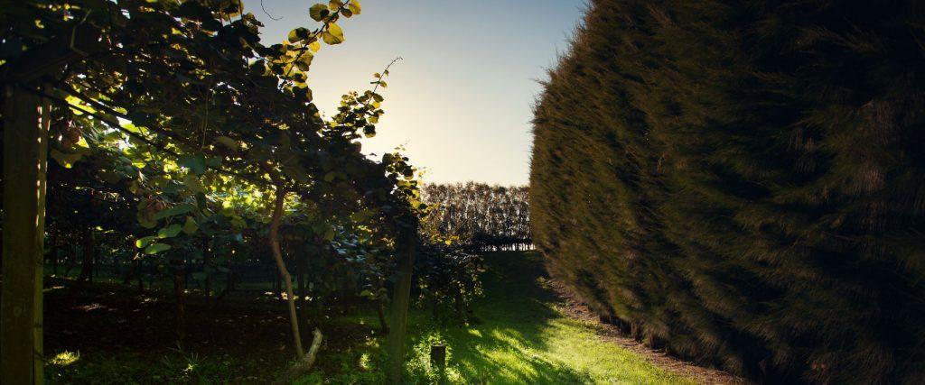 Pirihima Orchard